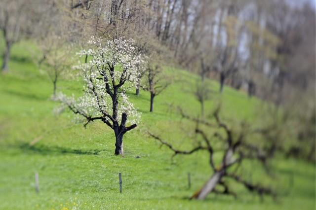 Blühender Baum (keystone)