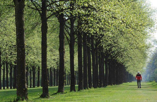Bäume im Schlossgarten von Schloss Schleissheim bei München. (Keystone)