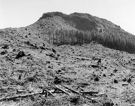 © Robert Adams: Clearcut, Humbug Mountain
