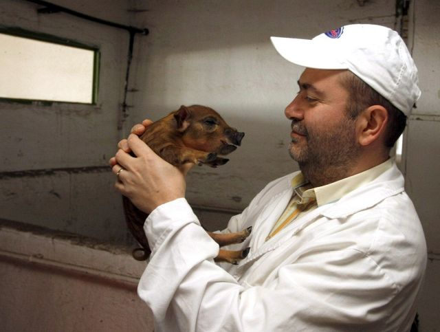 Peter Toth mit Schwein (Keystone)
