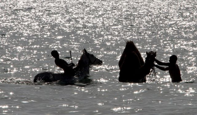 Palästinenser waschen ihre Transportmittel - ein Pferd und ein Kamel - im Meer am Gazastreifen. (Keystone)