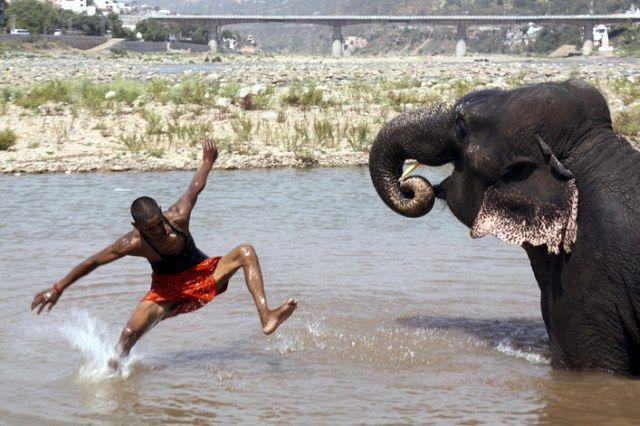 Elefantenreiter (keystone)