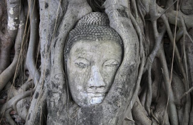Buddha-Kopf im Baum (keystone)