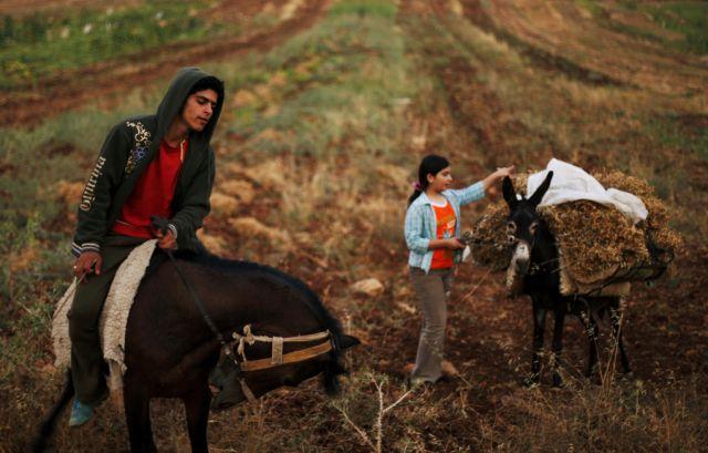 Palästinenser Pferd Esel (keystone)