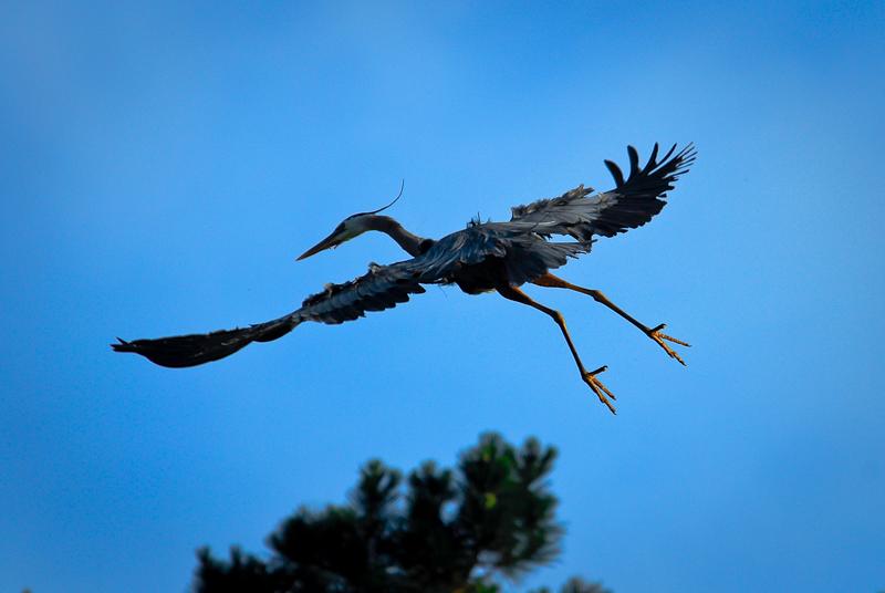 Fingerübungen - Vogelfotografie: Nah dran ist nicht genug