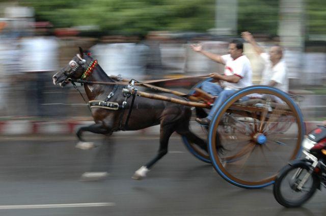 Traditionelles Pferderennen in Allahabad (keystone)