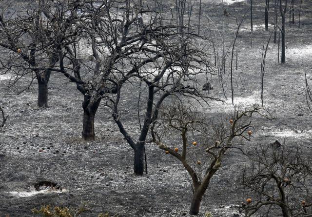 Waldbrand Orangenbäume (keystone)