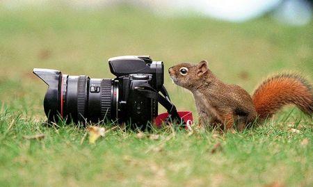Eichhörnchen oder Meisterfotograf am Auslöser? Selber rausfinden! (keystone)