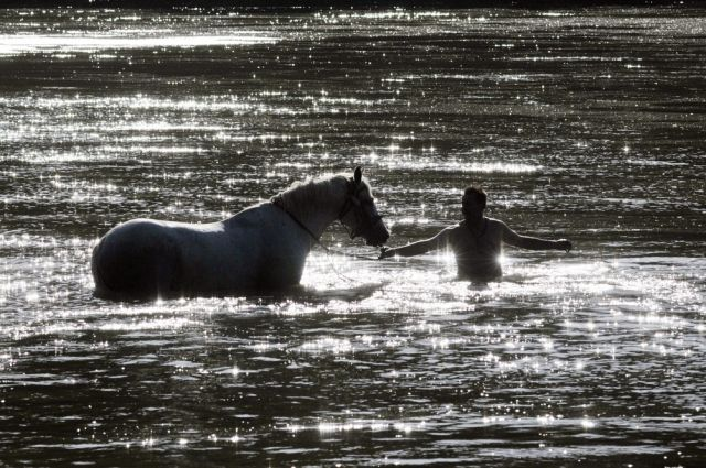 Ungarische Pferdewäsche (keystone)