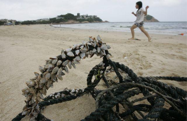 Synthetische Fischernetze (keystone)