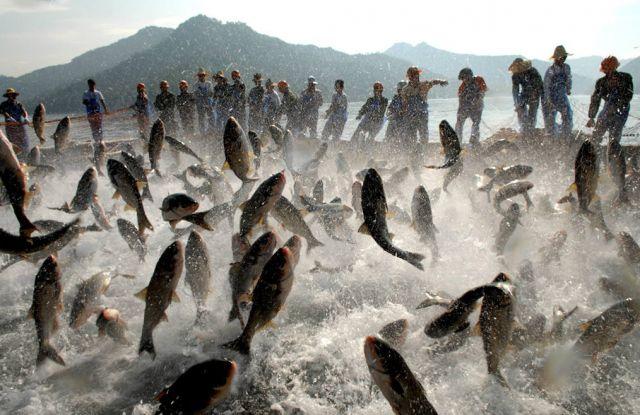 Panische Fische (keystone)