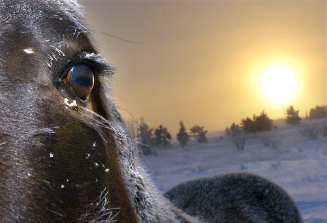 Tiefkühl-Pferd (keystone)