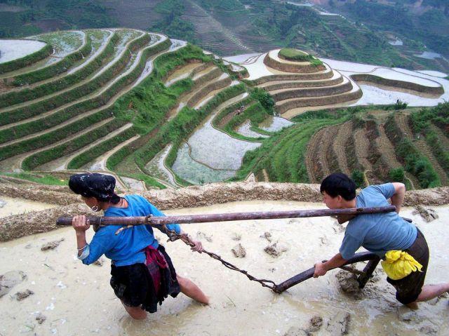 Terrassenfeld in China (keystone)