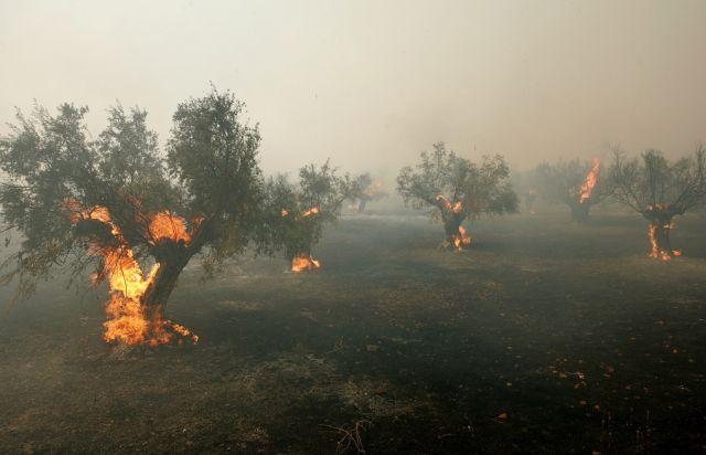 Brennende Ölbäume (keystone)