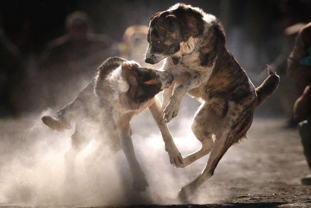 Hundekampf (keystone)