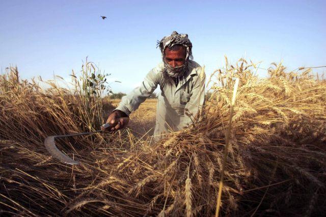 Afghanischer Bauer (keystone)