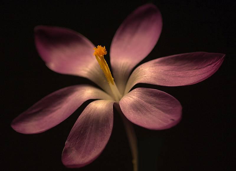 Blumenfoto mit Leselampe: Farben- und Tiefeneffekt