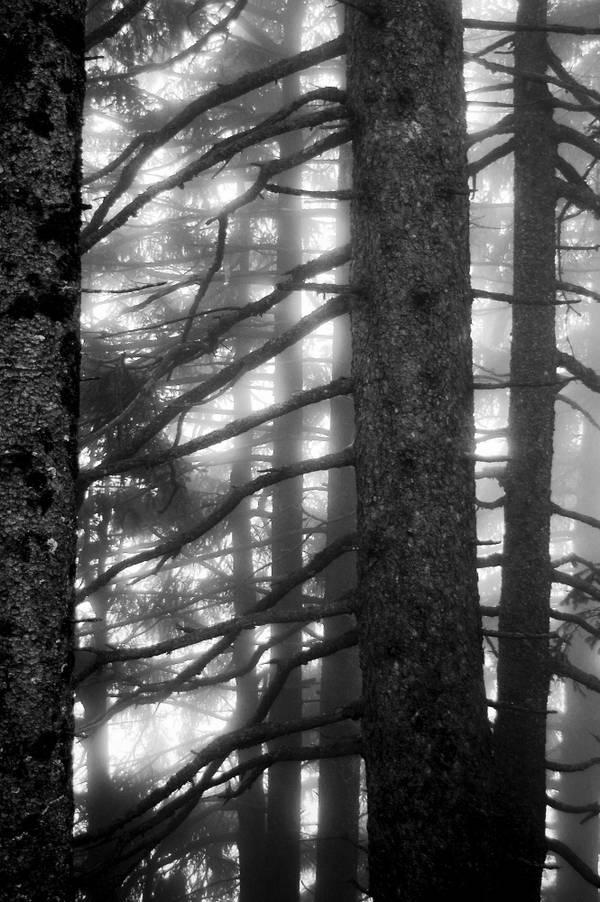 Stilleben im Nebelwald: Glühende Linien