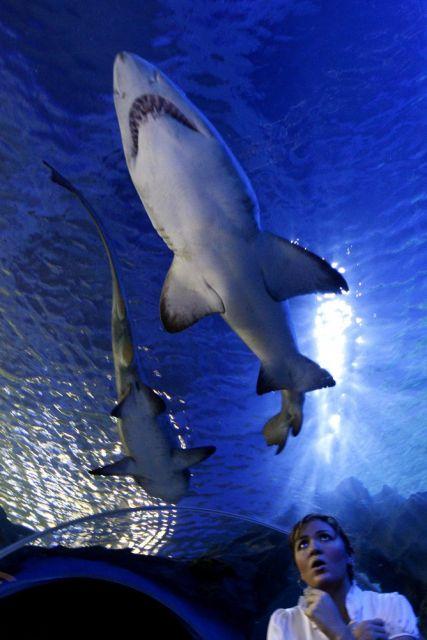 Aquarium (keystone)