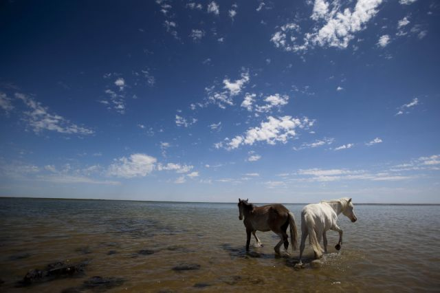 Pferde (keystone)