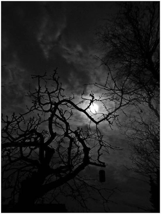 Mondnacht-Foto: Schattenspiele im Garten