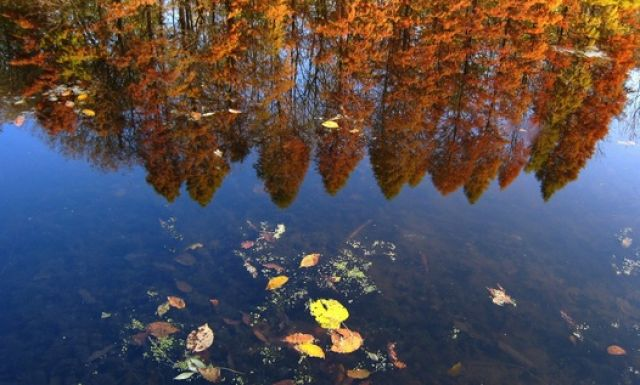Herbst (keystone)