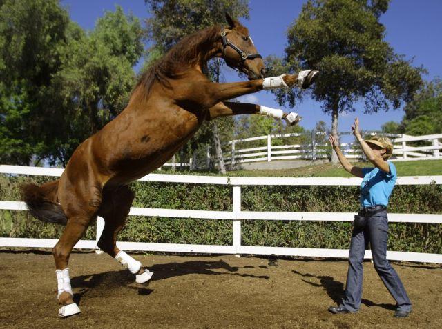 Lukas, das Pferd (keystone)