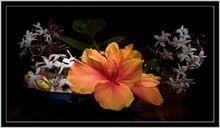 Mit Licht gemalt: Dunkelraum-Blumenfoto, © Dierk Topp