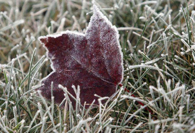 Frostblatt (keystone)
