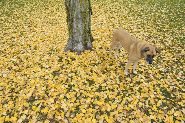 Fotografien aus 24 Stunden: Die Türme wachsen, die Blätter fallen