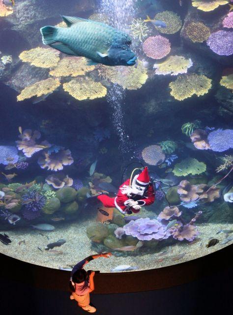 Nikolaus im Aquarium (keystone)