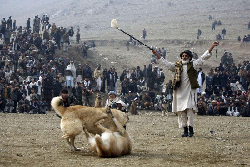 Zuschauer an einem Hundekampf (keystone )