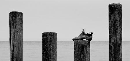 Leserfoto: Klick für Vollansicht (© Pascal Reis).