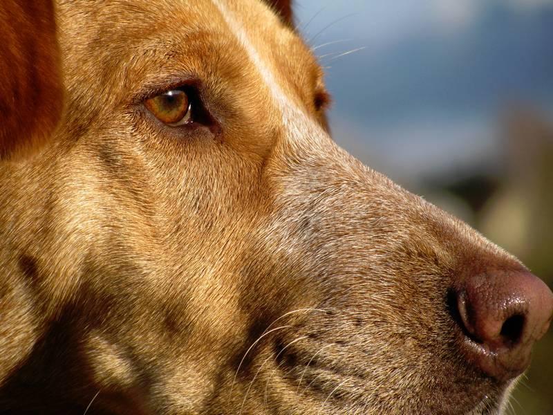 Hundeblick: Zu viel Halbes