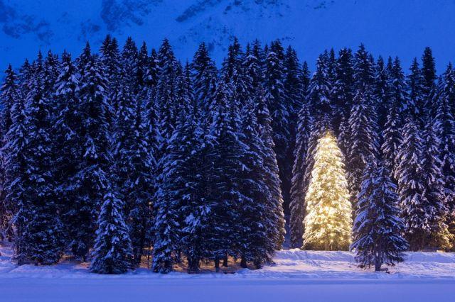 Weihnachtsbaum (keystone)