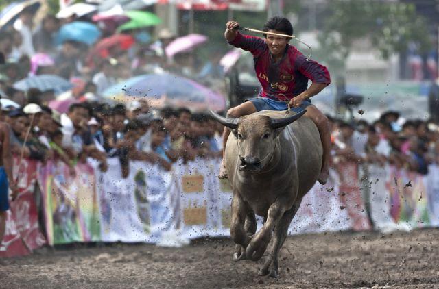 Wasserbüffelrennen (keystone)