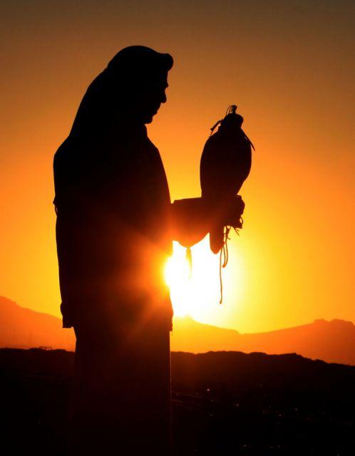 Falke, Tier, Sonnenuntergang