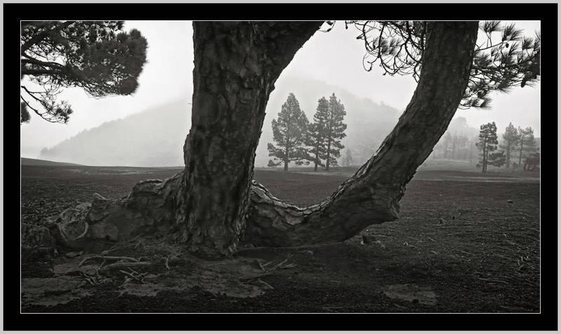 Regenlandschaft: Ballett der Grautöne