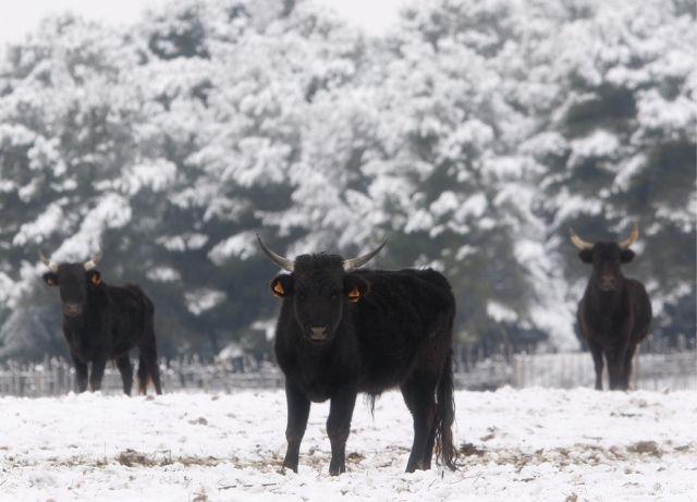 Winter, Frankreich