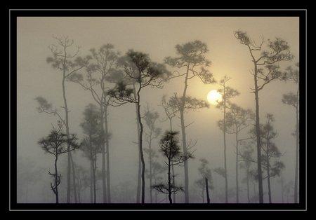 Sumpffotografie: Schattenriss mit Tiefe