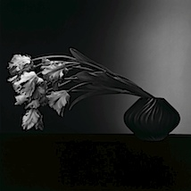 Robert Mapplethorpe: Parrot Tulips, 1988 © Robert Mapplethorpe Foundation. Used by permission