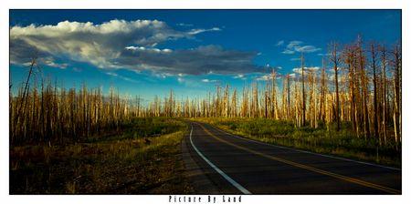 Waldbrand-Landschaft: Aus der Ecke heraus