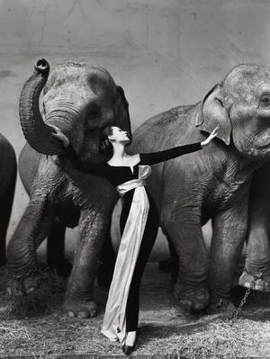 Dovima with elephants, Richard Avedon 1955. (Keystone/Christies)
