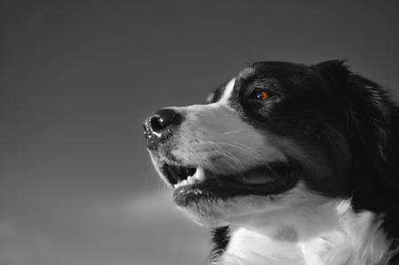 Hundeporträt: Drei klassische Komponenten