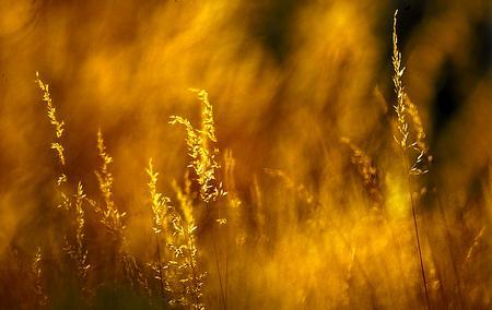 Gräser im Morgenlicht: Feuer und Flamme