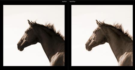 Mit der Funktion Aufhelllicht lassen sich in Lightroom die dunkleren Partien des Bildes selektiv aufhellen.