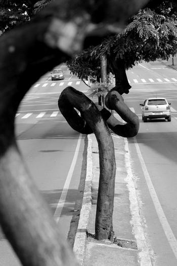 Strassenfoto: Ein Baum im Mittelpunkt