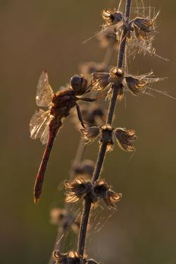 Insektenbild: Wichtige Bildelemente freistellen