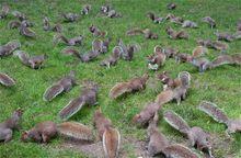 Eichhörnchen im Central Park, New York. © 2009 Samuel Raymann