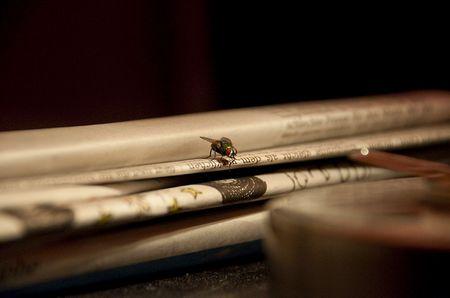 Makrofoto: Die Lese-Fliege